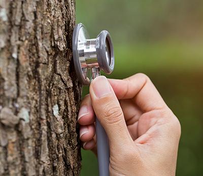 arboristična ocena dreves